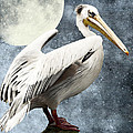 Pelican Night Poster by Angela Doelling AD DESIGN Photo and PhotoArt