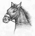 Pencil Drawing of a horse Poster by Kiril Stanchev