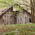 Pendleton County Barn Print by Randy Bodkins