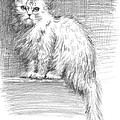Persian Cat Print by Sarah Parks