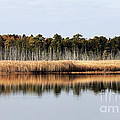 Pine Barrens Reflections Print by John Rizzuto
