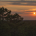 Pine Barrens Sunset NJ Poster by Terry DeLuco