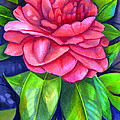Pink Camellia Print by Elaine Hodges