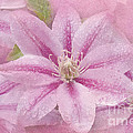 Pink Clematis Profusion Print by Betty LaRue