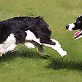 Playful Border Collies Poster by Laura Rothstein