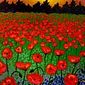 Poppy Carpet  Print by John  Nolan