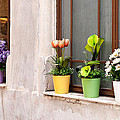Potted Flowers 02 Poster by Rick Piper Photography