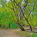 Poudre Trees-2 Print by Baywest Imaging