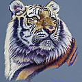 Pretty Boy Siberian Tiger Poster by Mary Dove