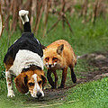Probably the World's Worst Hunting Dog Poster by Mircea Costina Photography