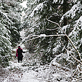 Protective forest in winter with snow covered conifer trees Print by Matthias Hauser