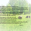 Psalm 23 The Lord Is My Shepherd Print by Susan Savad