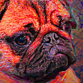 Pug 20130126v2 Poster by Wingsdomain Art and Photography