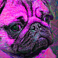 Pug 20130126v3 Print by Wingsdomain Art and Photography