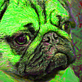 Pug 20130126v4 Poster by Wingsdomain Art and Photography
