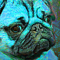 Pug 20130126v5 Poster by Wingsdomain Art and Photography