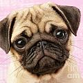 Pug Portrait Print by Greg Cuddiford
