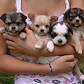 Puppies in Maria's arms Print by John Lautermilch