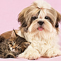 Puppy And Kitten Print by Greg Cuddiford