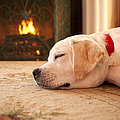 Puppy Sleeping by a Fireplace Print by Diane Diederich