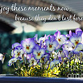 Purple Pansies and Life Quote Print by Nishanth Gopinathan
