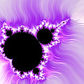 Purple white and black mandelbrot set digital art Print by Matthias Hauser