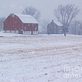 Quakertown Farm on Snowy Day Print by Anna Lisa Yoder