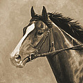 Racehorse Painting In Sepia Print by Crista Forest