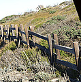Rail Fence Black Print by Barbara Snyder