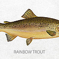 Rainbow Trout Print by Aged Pixel