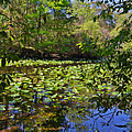 Ravine Gardens - A Different Look at Florida Print by Christine Till