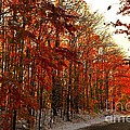 Red Autumn Road in Snow Poster by Terri Gostola