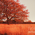 Red Autumn Print by Violet Gray