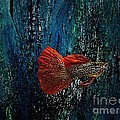 Red Fin Fish Print by Mario  Perez
