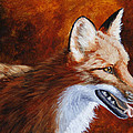 Red Fox - A Warm Day Print by Crista Forest