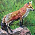Red Fox Print by Lorrie T Dunks