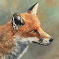 Red Fox Portrait Poster by David Stribbling