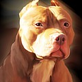 Red Pit Bull by Spano Poster by Michael Spano
