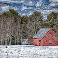 Red Shed in Maine Print by Guy Whiteley