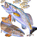 Redfish Trout Poster by Carey Chen