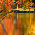 Reflection  of My Thoughts  Autumn  Reflections Poster by Peggy  Franz
