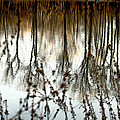 Reflections Print by Joanne Beebe