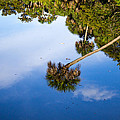 Reflections Print by Lee Stewart