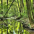 Reflections Of Tranquility Print by Adam Jewell