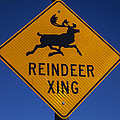 Reindeer Xing Poster by Garry Gay