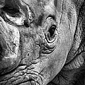 Rhino Poster by Emily Stauring