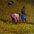 RICE CROP IN NEPAL Poster by Marcello Martinho