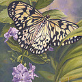 Rice Paper Butterfly Print by Lucie Bilodeau