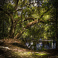 River Oak Print by Marvin Spates