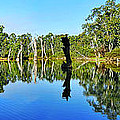 River Panorama and Reflections Print by Kaye Menner